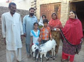 _Goat1