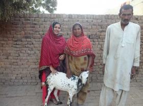 _Goat2